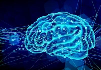 脳シナプス